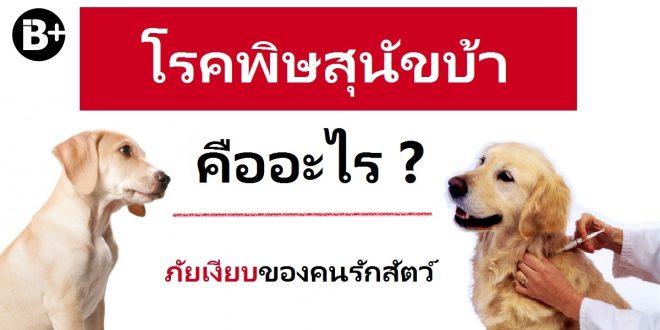 โรคพิษสุนัขบ้าคืออะไร – ภัยเงียบของคนรักสัตว์